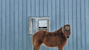 This is a picture of a window, not a horse